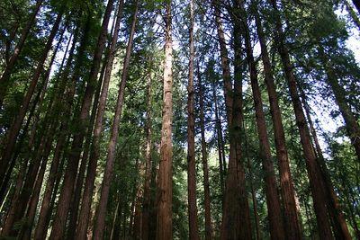 IMG_3637 Muir Woods