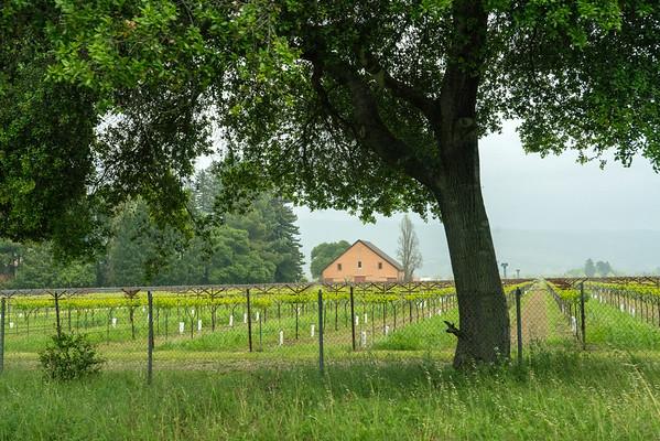 Vines tree barn 02873
