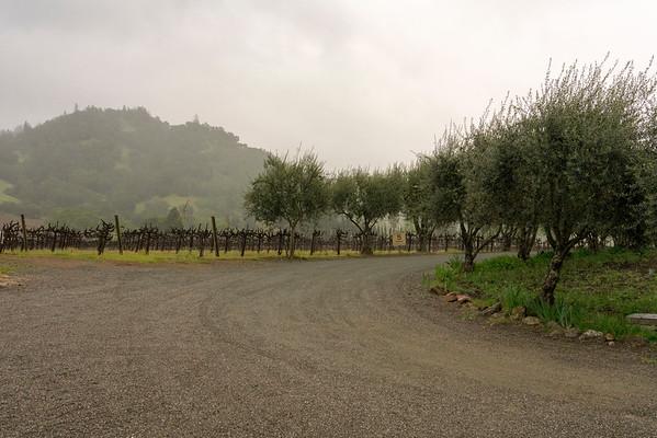 fog vines olives 02870