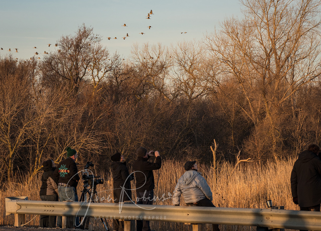 Birders from around the world gather in Kearney