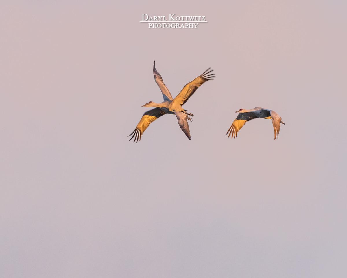"The Extremely Rare ""Dragon Crane"""
