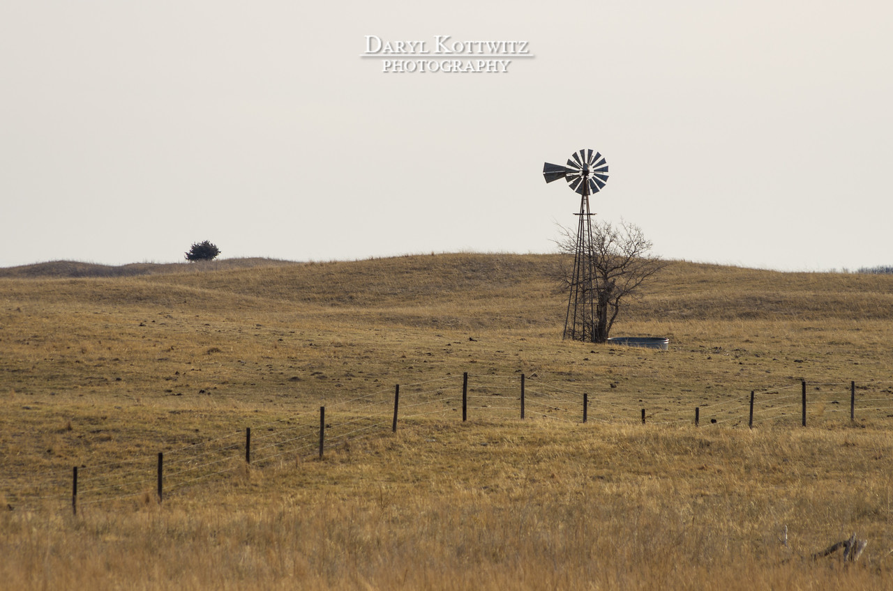 The Windmill and the Tree