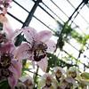 "<span id=""title"">Orchids</span> <em>Balboa Park</em>"