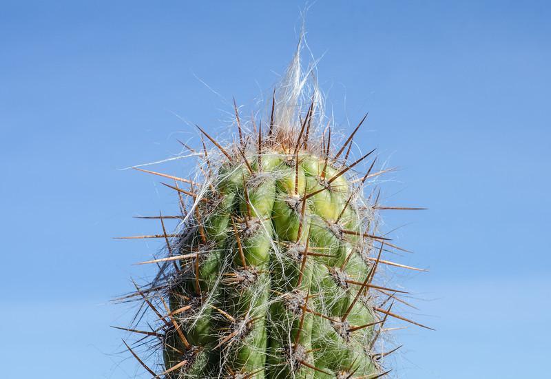 "<span id=""title"">Cactus Garden #4</span> <em>Balboa Park</em>"