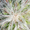 "<span id=""title"">Cactus Garden #5</span> <em>Balboa Park</em>"