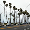 Palm trees line up the shore in Santa Barbara, California.