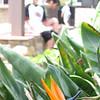 Mission San Luis Obispo, garden