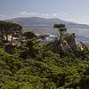 The Lone Cypress in Monterey