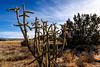 Near La Cieneguilla Petroglyphs in Santa Fe, New Mexico