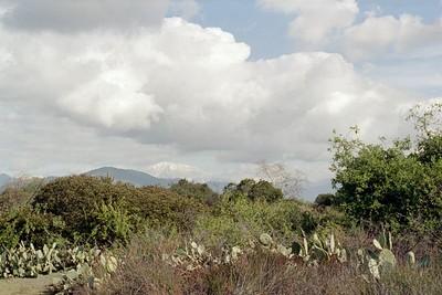 1/1/05 Nature trail. Santa Fe Dam Recreation Area, Irwindale, Los Angeles County, CA