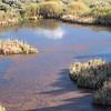 Santa Fe Canyon Preserve - Beaver in pond