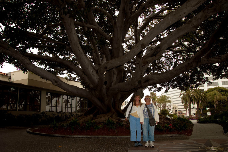 Amy and Charlene before the amazing 1879 Moreton Bay Fig tree at our hotel, the Fairmont Miramar in Santa Monica. It has to be one of the most beautiful trees I have ever seen, the photos can't begin to do it justice. It is well worth checking out if you are in Santa Monica, just step inside the gates at the Fairmont on Wilshire Blvd. at Ocean Ave.