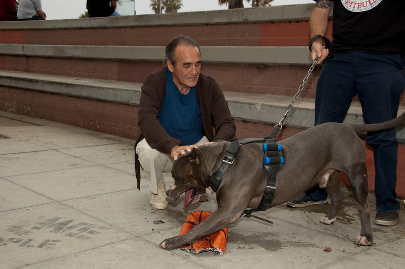 Very cool pit bull on Venice Beach.  He slobbered all over me!