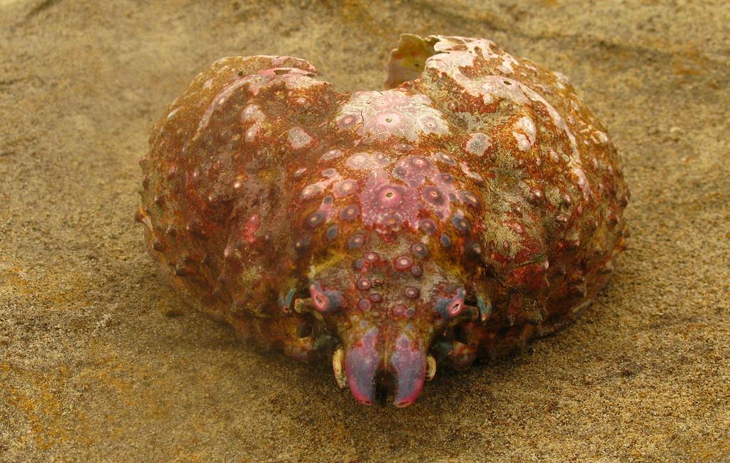 ancient sea creature....