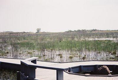4/9/00 Boardwalk at main vernal pool. Santa Rosa Plateau Ecological Reserve, Riverside County, CA