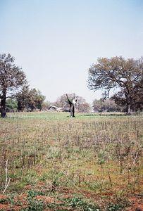 4/9/00 Vernal Pool Trail, Santa Rosa Plateau Ecological Reserve, Riverside County, CA