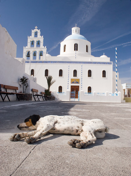 Church Square  Sleeping Dog<br /> Ia, Santorini, Greece<br /> April 2006<br /> © WEOttinger, The Wildflower Hunter - All rights reserved<br /> For educational use only - this image, or derivative works, can not be used, published, distributed or sold without written permission of the owner.