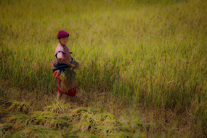 Sapa, Vietnam-21