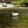 Bosna Springs (source of river Bosna) near Sarajevo