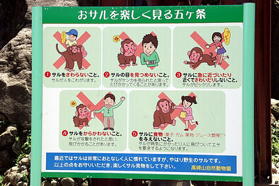 Important things to know when dealing with wild monkeys