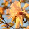 Sunlight warmly lights Winter blossoms in Savannah GA