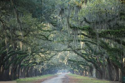 Savannah and Charleston