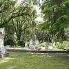 Savannah 052