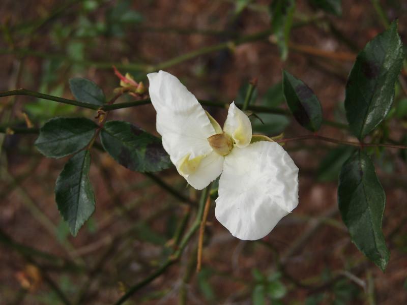 Savannah Botanical Garden, Savannah GA