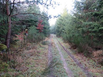 Parc Natural Regional des Vosges du Nord