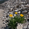 Some flowers persist amidst the scree.