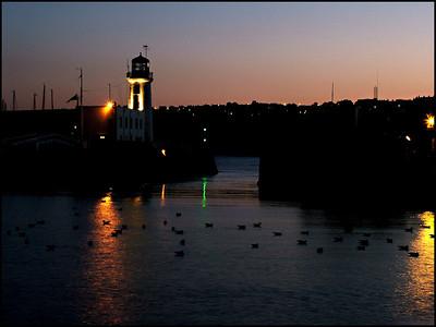 Harbour gull's at dusk