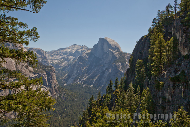 Half Dome Framed by Forest