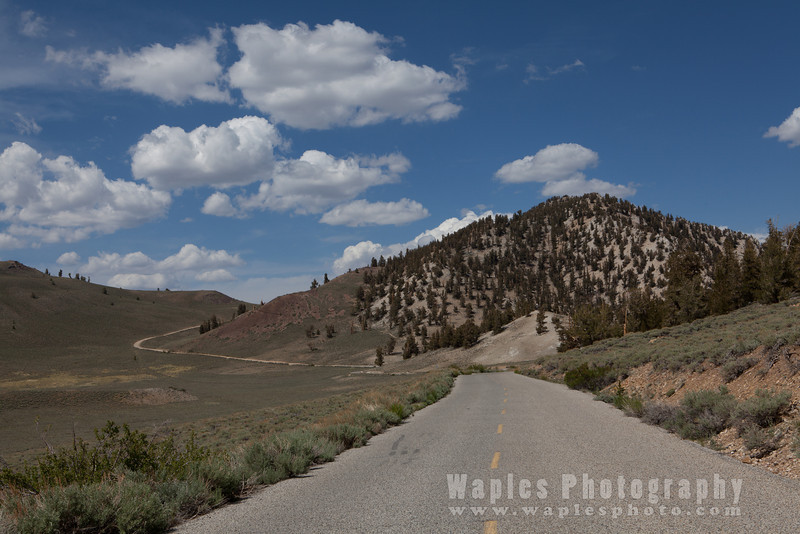 Driving along White Mountain Road near Schulman Grove