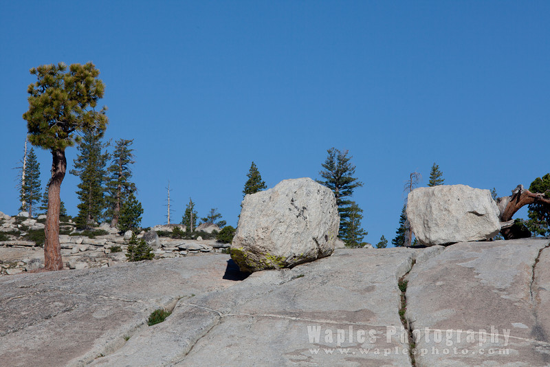 Pine & Boulders, Olmsted Point