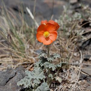 Scenes From California's Eastern Sierra Nevadas, June 2012