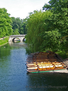 Summer on the River Cam
