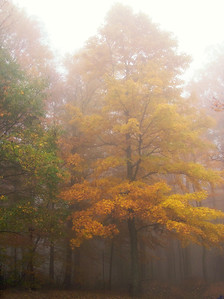 Fall colors in the mist at Grayson Highlands State Park, Virginia
