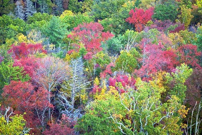 Fall colors at the bottom of Linville Gorge, North Carolina
