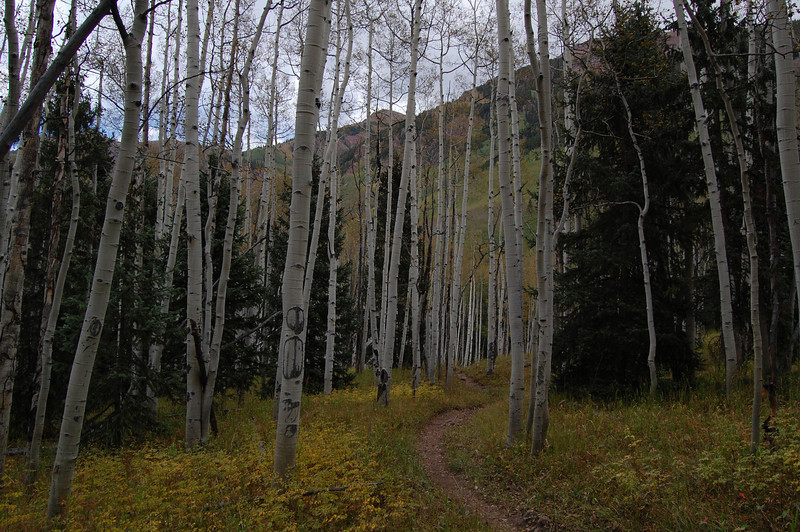 Nothing is as serene as a walk in the forest. <br /> Aspen, Co.
