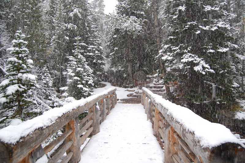 We arrived at the trail at 4pm and it was snowing heavily. Undeterred, we grabbed our winter gear and headed out for a short hike. The falling snow created spectactular scenery such as this. <br /> Rocky Mountain National Park,<br /> Estes Park, CO