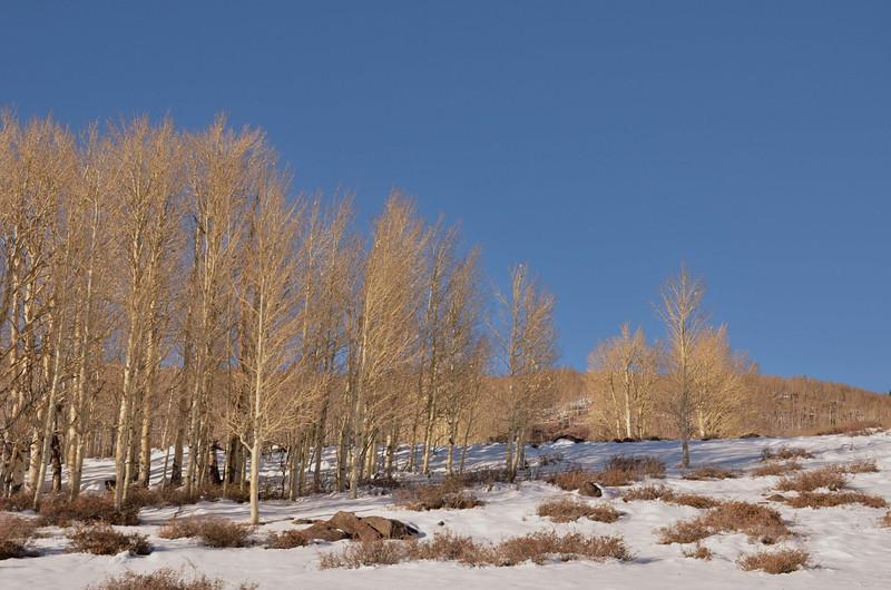 Highway 12 - Scenic Highway <br /> Boulder Mountain, UT