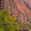 Walls of wonder,Zion Canyon<br /> Zion National Park, UT