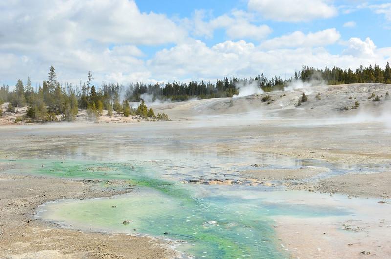 Norris Geyser Basin,Yellowstone