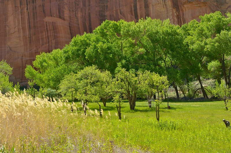 Fall colours in Capitol Reef