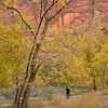 Autumn colours in Zion Canyon<br /> Zion NP<br /> Utah