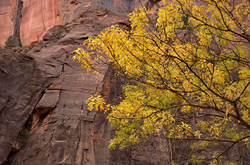 Zion Canyon<br /> Zion NP, UT