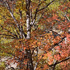Autumnal colouring in Zion National Park<br /> Utah