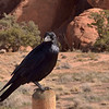 A local resident!<br /> Arches National Park