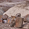 Portions of petrified trees<br /> Petrified Forest National Park