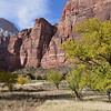 Big Bend,<br /> Zion National Park